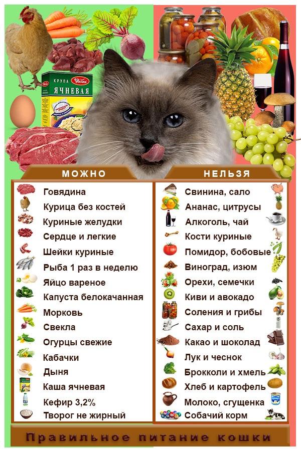 всем что нельзя есть кошкам категорически картинки это